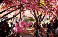 Top Ten Must-See International Events in NYC