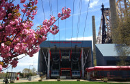 Roosevelt Island Cherry Blossoms: Prettiest Pink in NYC